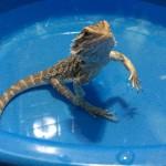 お風呂で立つ