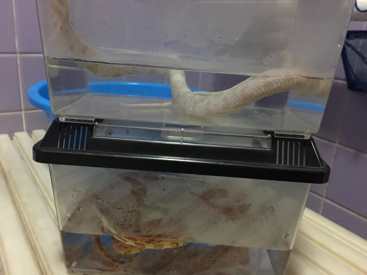 ヘビと温浴