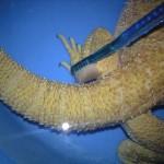 フトアゴヒゲトカゲとお風呂