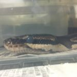 ヘビの目玉真っ白2
