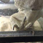 銀ちゃんついに爪が飛ぶ