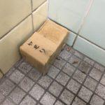 トイレの守り神ヤモリちゃん